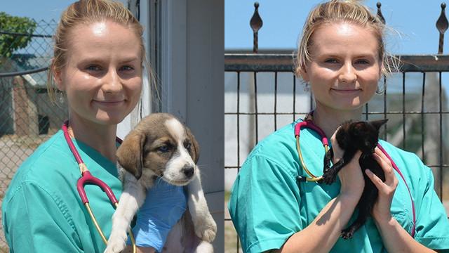Finlandiyalı Heidi sokak hayvanlarının bakım ve tedavilerini yapıyor