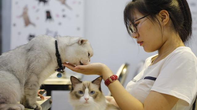 Çin'de evcil hayvan kafeleri büyük rağbet görüyor