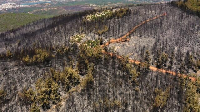Bodrum'da siyaha bürünen ormanlar havadan görüntülendi