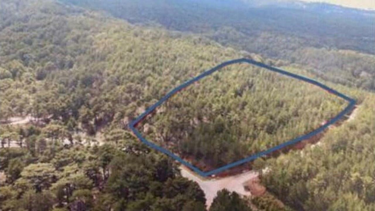 Yanmayan ormanları da otel için kesecekler